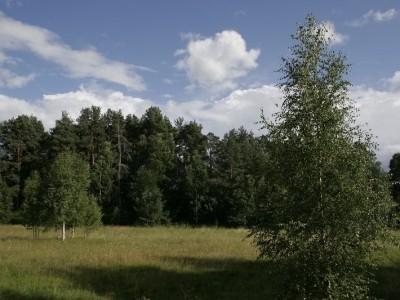 Территория базы отдыха летом